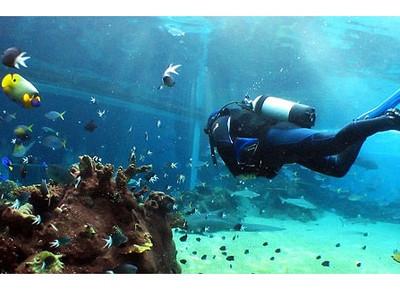 подводное снаряжение